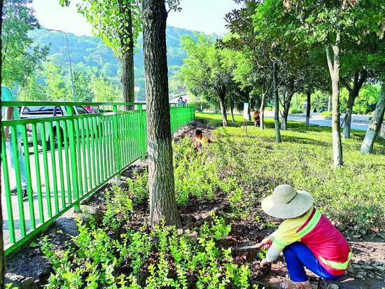 涪陵补植5万余株苗木为城市添绿
