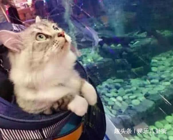 """第一次逛水族馆的猫咪看到鲨鱼表情太可爱,""""那条鱼我包了!"""