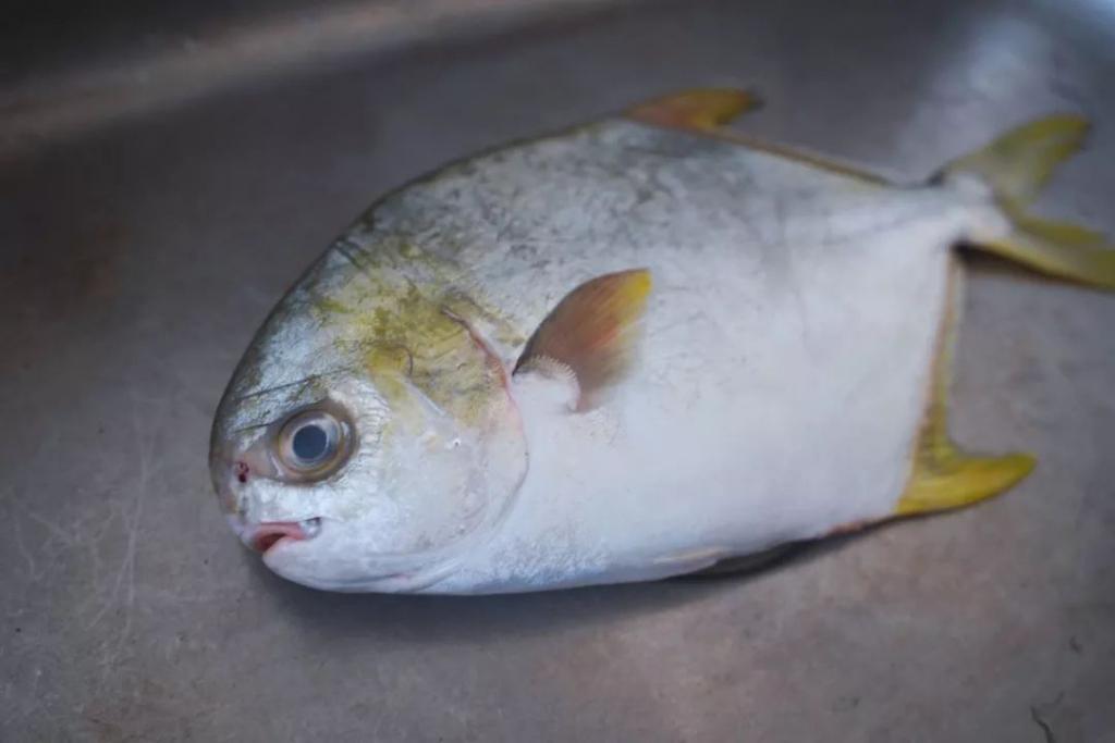 火腿开屏孔雀鱼,鲜上加鲜,年年有鱼,祝大家过个水煮鸡胸肉怎么做v火腿图片