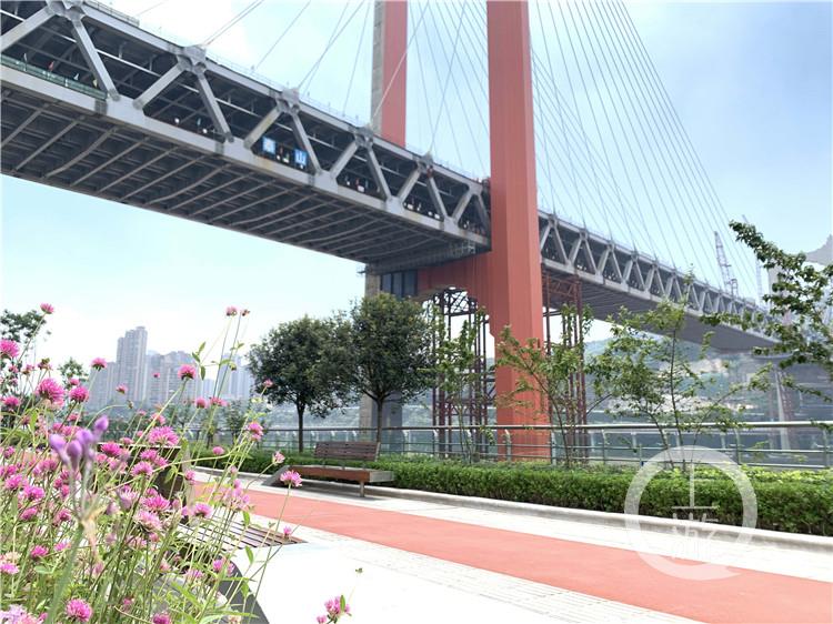 """红岩村嘉陵江大桥""""红""""起来了 还差""""一丁(4986614)-20200802164133.jpg"""
