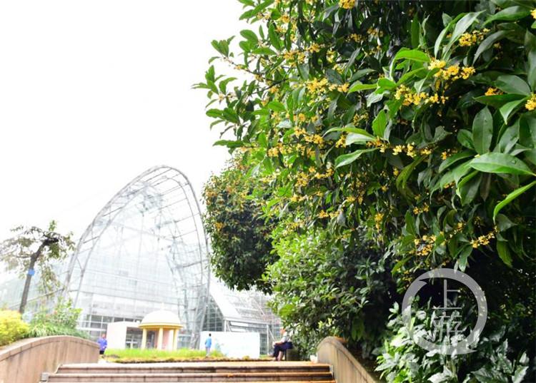 国庆假期到南山植物园赏桂花 感受自然之美(5281726)-20200928212403_副本.jpg