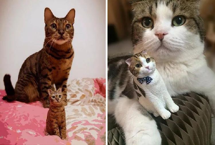 壁纸 动物 猫 猫咪 小猫 桌面 750_509