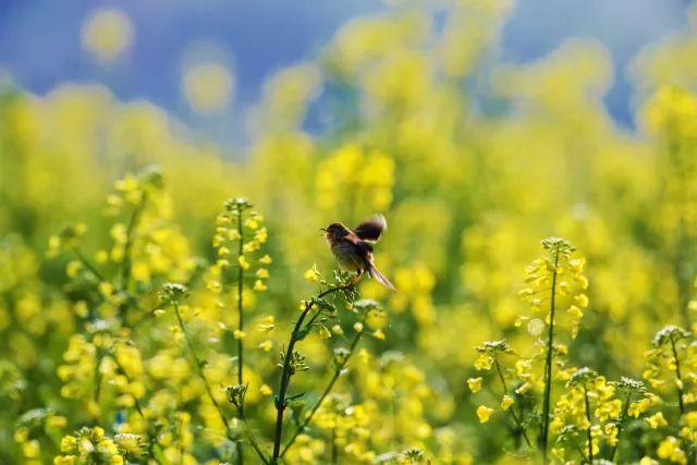 描写春花,春雨,春早人勤,春草的诗句,各三句