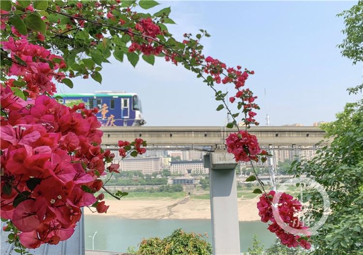李子坝坡坎崖绿化美化项目为城市添新景。(4990191)-20200803144105_副本.jpg