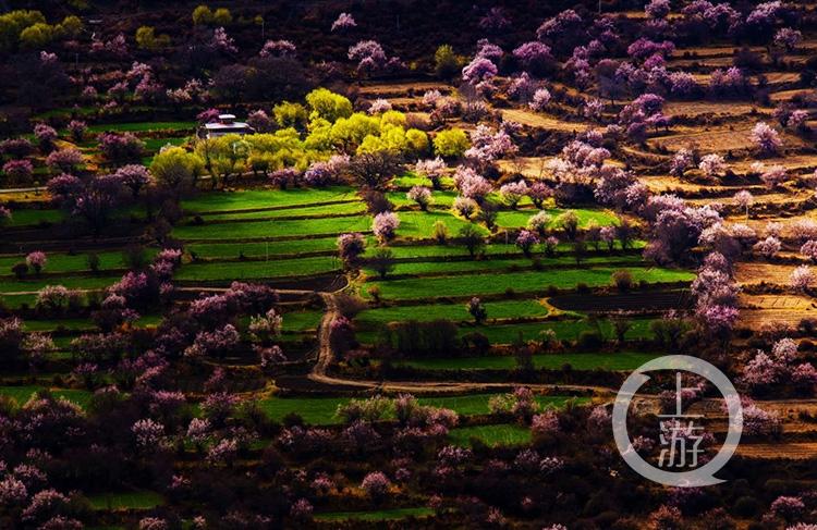 此外,林芝察隅县古玉乡的罗马村,也一直有最美桃花村的美誉.
