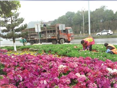 1.3万株鲜花扮靓重庆涪陵新城区交通节点