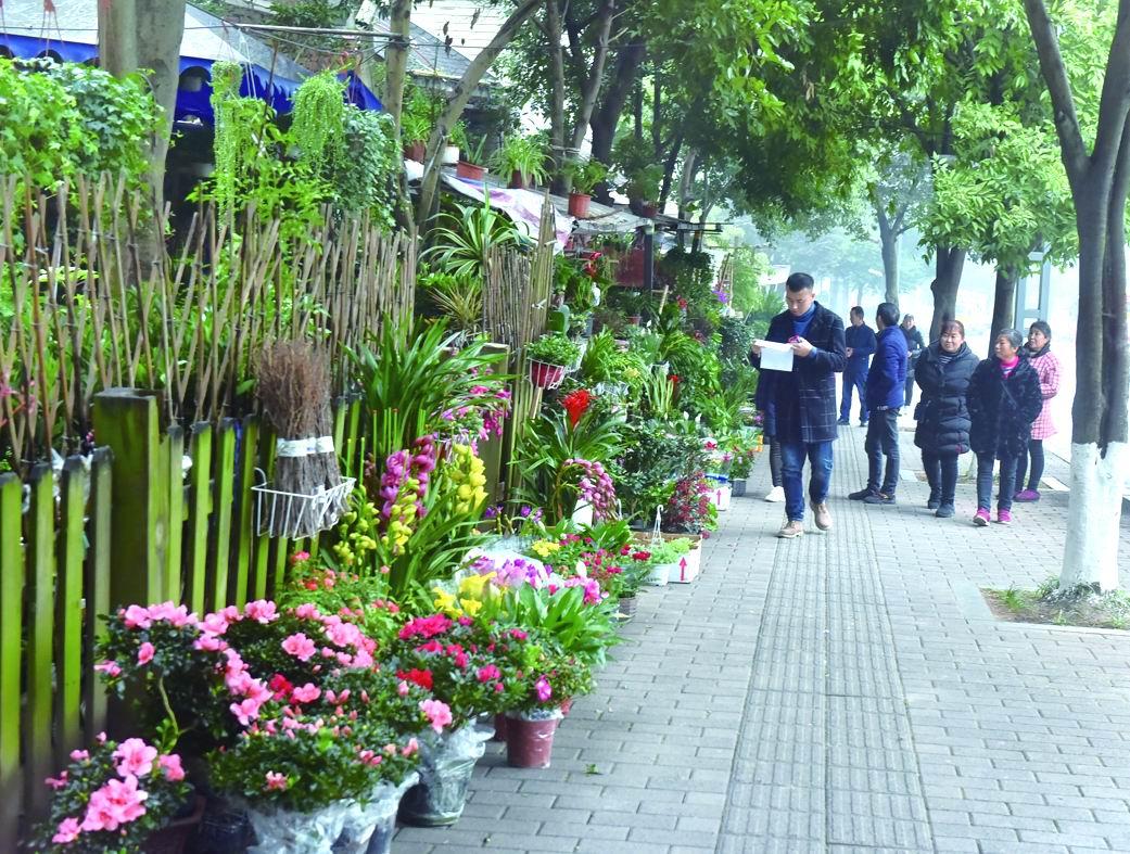 天冷涪陵城花卉市场不冷 开花植物和常青植物受追捧
