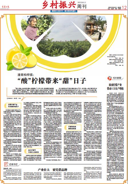《重庆日报》整版聚焦潼南柠檬产业发展