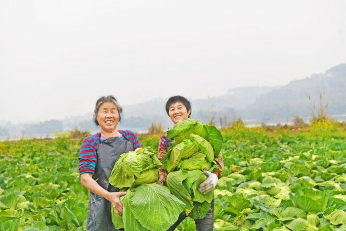 """潼南区做好冬季蔬菜保供 让市民""""菜篮子""""拎得""""更轻松"""""""