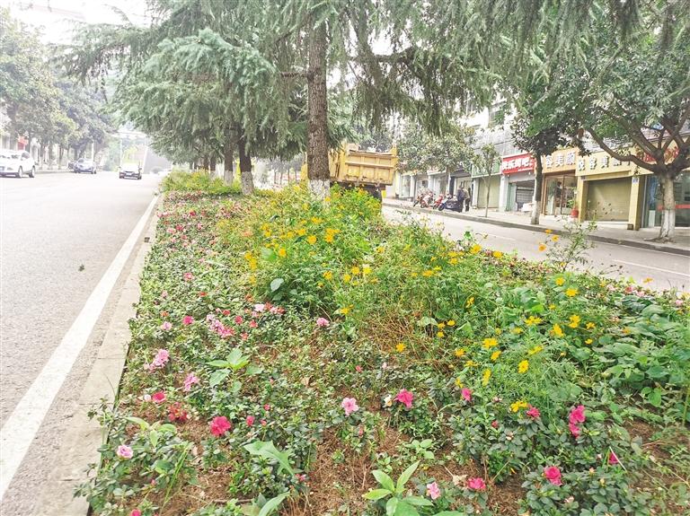 万州:推窗见绿 出门见景 四季见花
