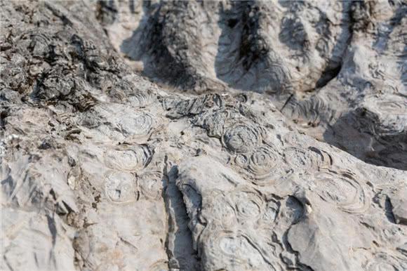 酉陽發現改變地球演化的化石 揭開古氣候密碼