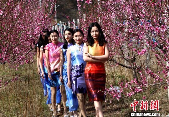 旗袍女性桃花林里拍写真人面桃花相映红