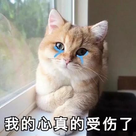 我的心真的受伤了(流泪猫咪)_猫咪_流泪_受伤_真的表情