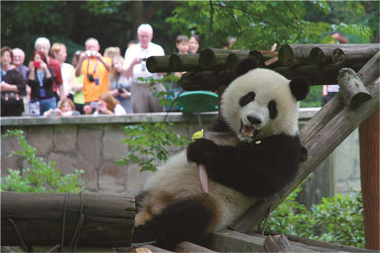 动物园.jpg