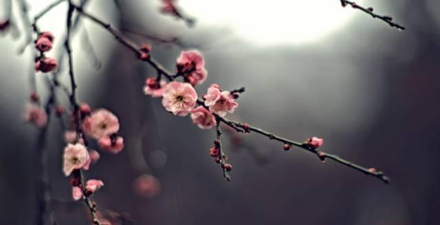2019重庆赏花时间表!按月打卡,看遍花样重庆