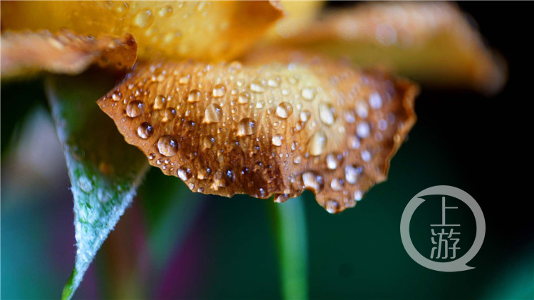 微距鏡頭下的花花,靜悄悄地美