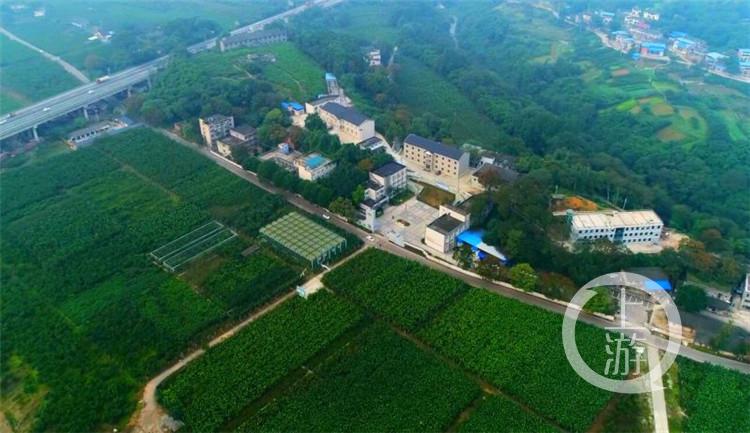重庆市蚕科院生态果桑园.jpg