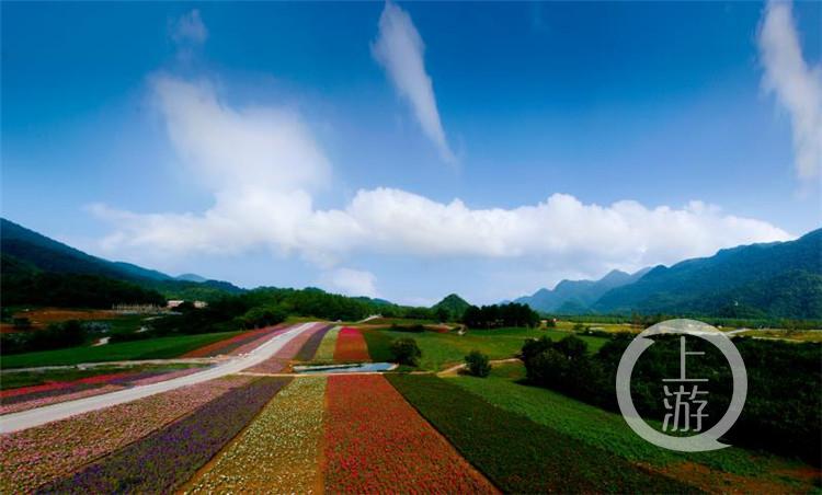 巫溪红池坝闭园一年改造后开园 首日游客量过万