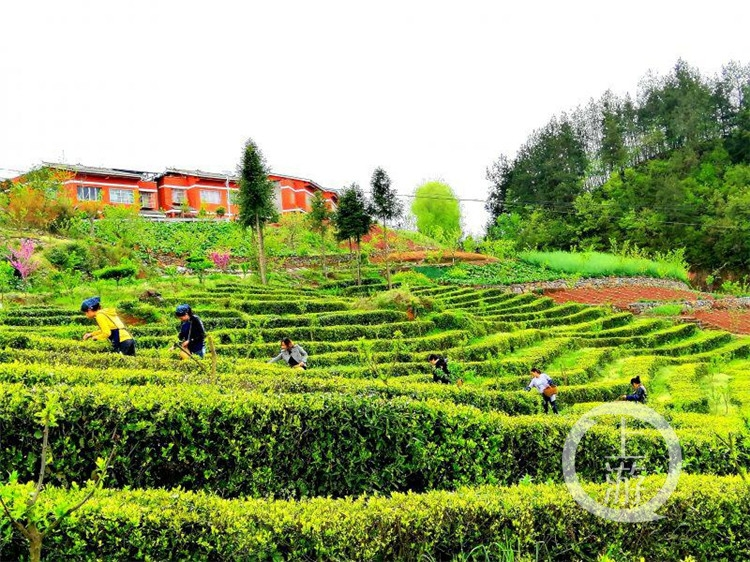 重慶十大最美鄉村 | 巫山縣茶園村美麗鄉村示范點