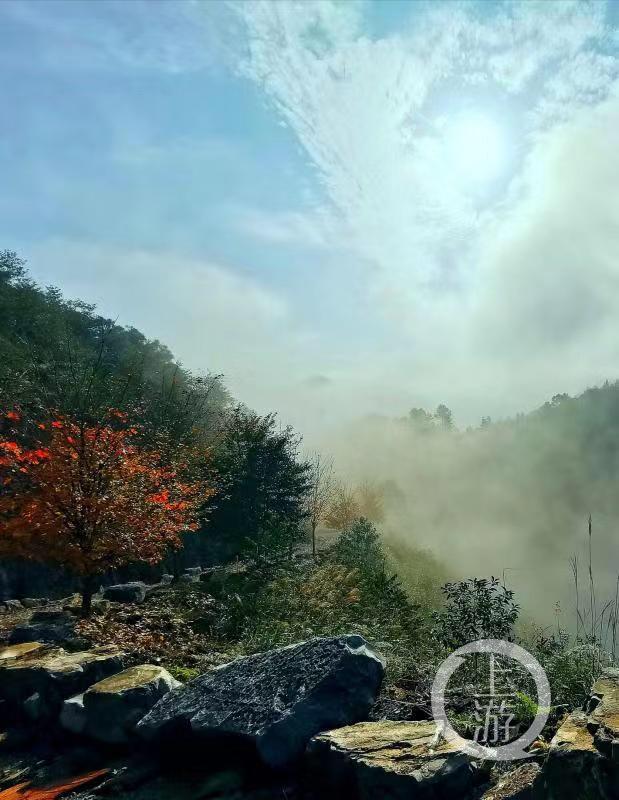 天青色等烟雨 丰盛彩色森林在等你