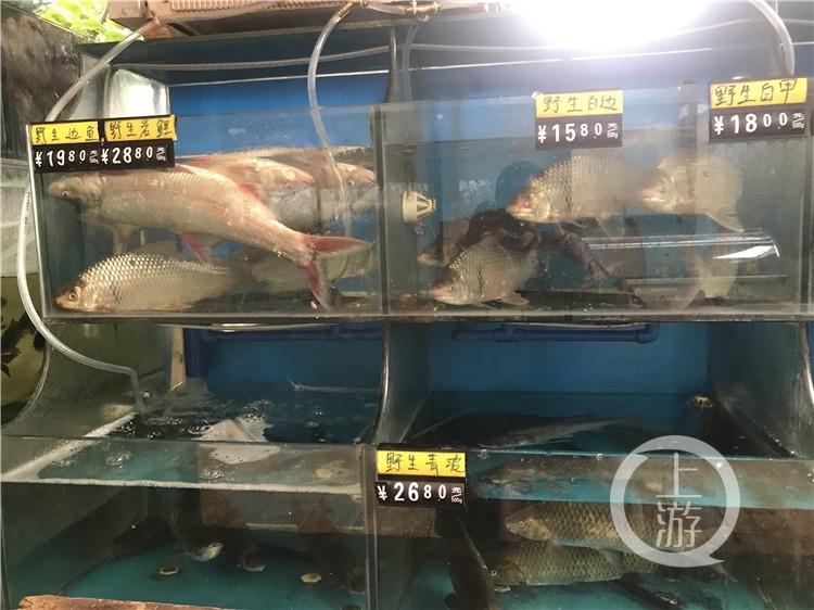 配图,长江禁捕,水库生态鱼养殖成香饽饽(3946181)-20200103173511.jpg