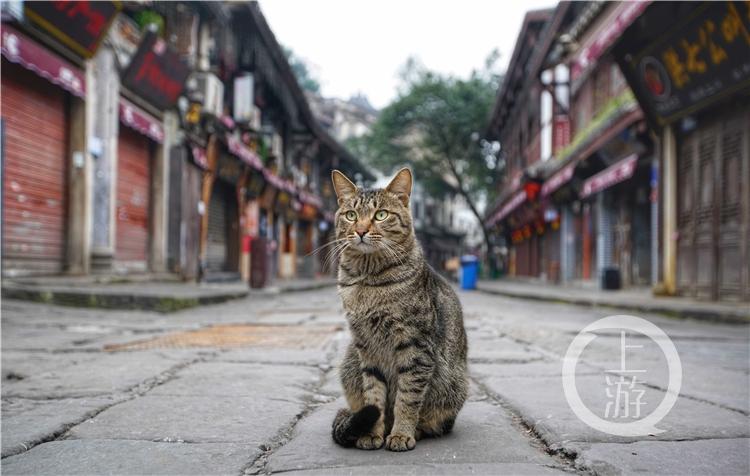 有爱心商家每隔一天会给磁器口景区的猫猫狗(4231827)-20200226143113_副本.jpg