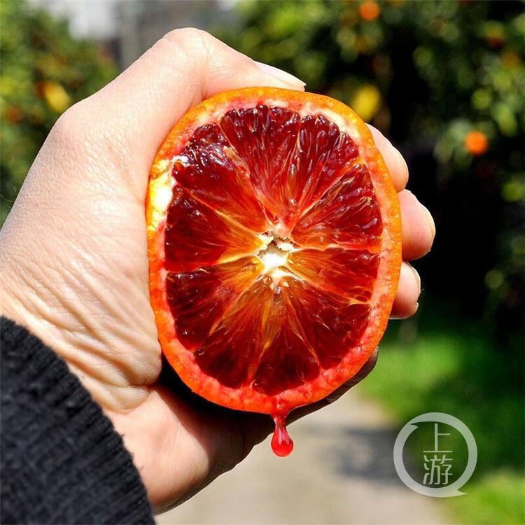 图配直降近14元,万州玫瑰香橙在京东开启(4234915)-20200226202345.jpg