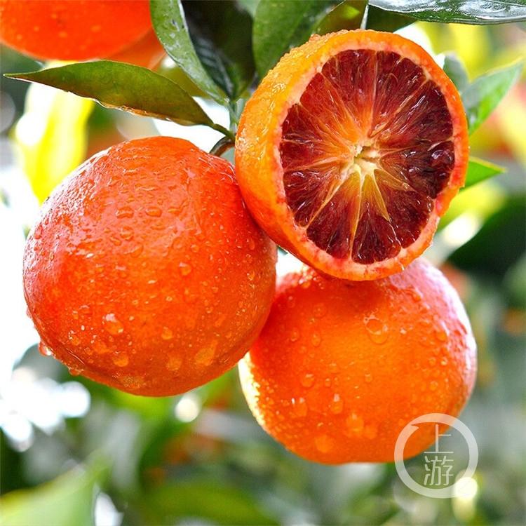 图配直降近14元,万州玫瑰香橙在京东开启(4234913)-20200226202335.jpg