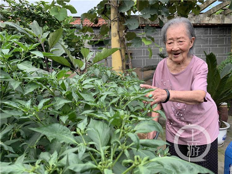 徐光镜和她种的辣椒(4784657)-20200621155459_副本.jpg