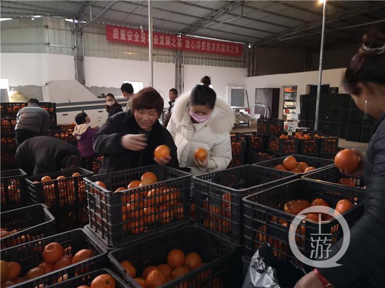 傅坝村柑橘喜迎丰收(4826009)-20200630201011_副本.jpg