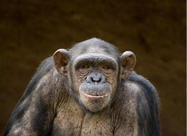 人类从猿猴演化而来是流传很广的误解。事实上,人类和猿猴都演化自一个共同祖先,而且都还在不断发生着演化