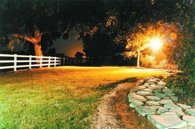 """夜间的""""光污染""""可能导致植物减产"""