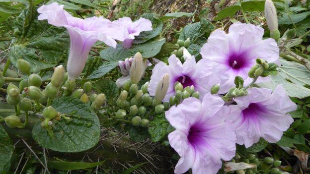 雾林中生长的开花植物