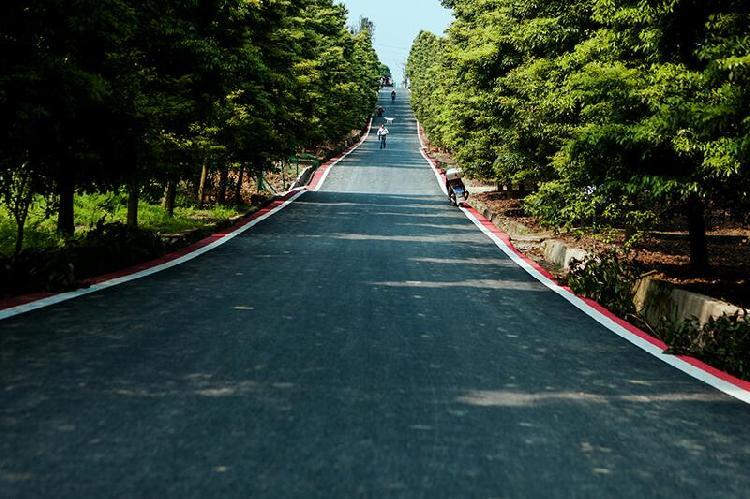 重庆市太寺垭森林公园3.jpg