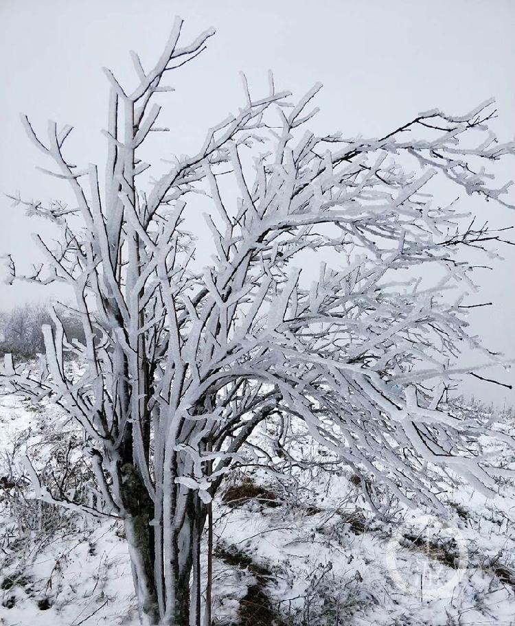 树枝上厚厚的积雪-FZ10023580106.jpg