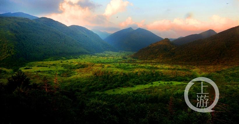 五里坡葱坪高山湿地动植物资源非常丰富.jpg